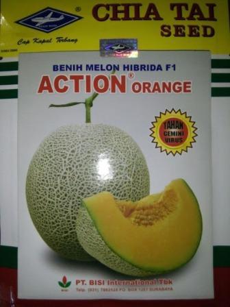 Melon Action Orange, Jual murah Bibit Melon Action Orange, Bibit melon Action Orange, Action Orange Cap Kapal Terbang
