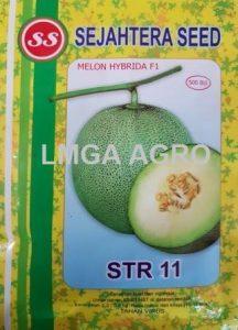 Jual Bibit Melon STR 11 F1-Sejahtera Seed