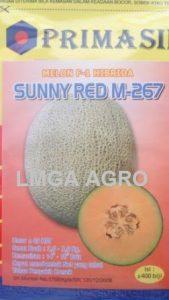 Jual Bibit Melon Sunny Red F1-Primasid