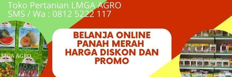 Belanja Online Benih Panah Merah, Jual Online Benih, Benih Panah Merah, LMGA AGRO, Toko Pertanian