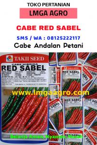 MENANAM CABE KERITING, CARA MENANAM CABE, CABE KERITING RED SABEL, JUAL BENIH CABE RED SABEL, LMGA AGRO, HARGA MURAH