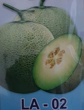 Buah Melon LA-02 F1,LMGA AGRO