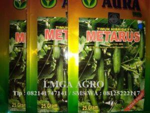 Mentimun Metarus F1,LMGA AGRO