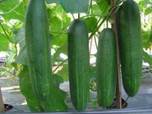 tanaman sayur, menanam , jual benih murah, lmga agro