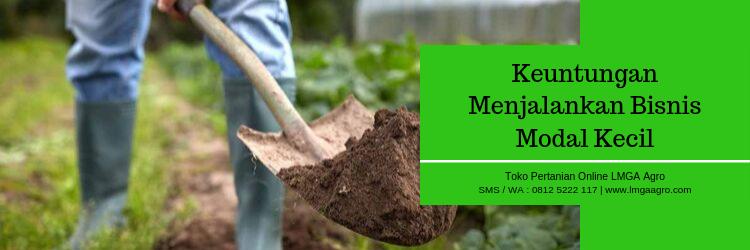 bisnis,modal,bisnis modal kecil,pertanian,pertanian indonesia,budidaya tanaman,budidaya,benih unggul,hidroponik,tanaman hidroponik,usaha rumahan