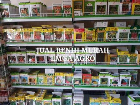 usaha kecil, pertanian, peluang usaha, jual benih hibrida, toko pertanian, toko online, lmga agro