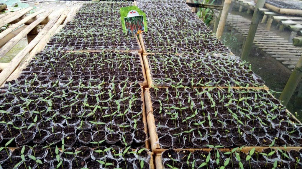 peluang usaha, pembibitan, benih hibrida, toko pertanian, online shop, lmga agro