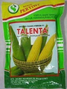 jagung manis f1 talenta,jagung manis,benih jagung,budidaya jagung