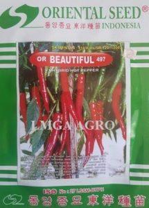 Benih OR Beautiful 497, Benih Cabai Besar OR Beautiful, LMGA AGRO