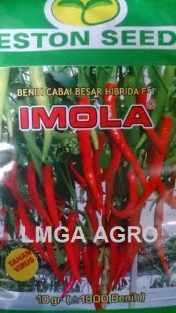 Cabai Imola, Eston Seed, Cabe, F1 Imola, cabai HPT 1730, Cap Kapal Terbang, LMGA AGRO