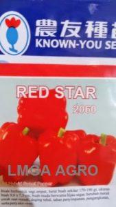 CABAI RED STAR