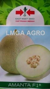 MELON AMANTA,benih melon,budidaya melon,panah merah,benih melon hibrida
