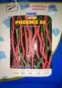 pohon cabe, menanam cabe, jual benih, lmga agro, cabe phoenix 55 F1