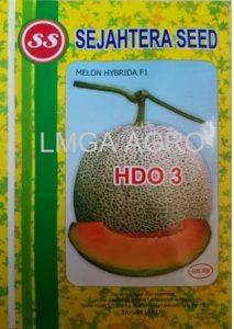 MELON F1 HDO3, HDO 3, benih, benih melon, tahan virus, melon orange