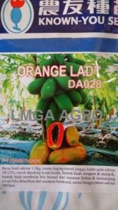 Orange Lady, Benih Pepaya, Harga Murah, Terbaru, Known You Seed, LMGA AGRO