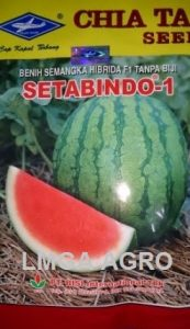 SEMANGKA SETABINDO