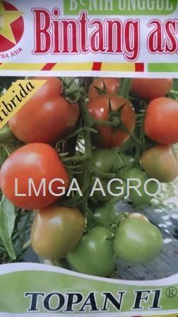 tomat f1 topan, topan f1, tomat tahan virus, benih, benih tomat, bintang asia, lmga agro, toko benih