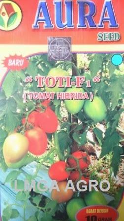 Tomat, Toti, Aura Seed, Murah, LMGA AGRO, Toko Online, Pertanian, Petani