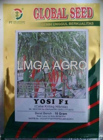 benih, benih cabai, cabai keriting, cabai yosi, benih cabai yosi, global seed, lmga agro, toko pertanian, jual benih