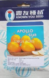 Melon, Kuning, Cantalope, Apollo