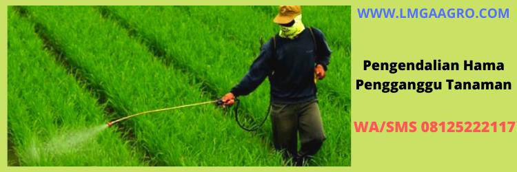 hama , tanaman, pestisida, LMGA AGRO, Toko Pertanian, Online