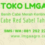 CABAI RED SABEL TAHAN CACAR BUAH