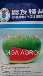 semangka farmers giant, farmers giant, semangka, benih, benih semangka, tahan virus, daging merah
