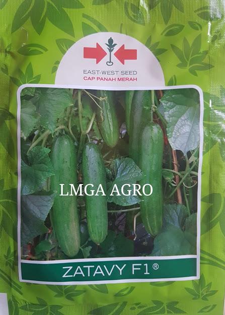 timun zatavy, timun tahan virus, timun tidak pahit, timun panah merah, benih timun zatavy, benih timun panah merah, lmga agro, toko pertanian, grosir benih