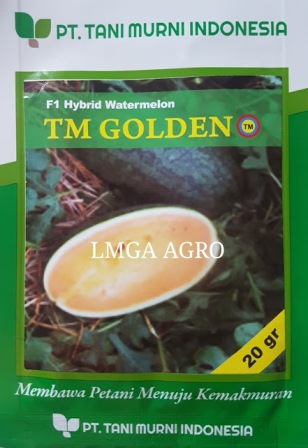 TM Golden, semangka,benih, benih semangka, semangka tm golden, semangka kuning, semangka inul