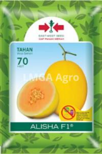 melon alisha, alisha, melon tahan virus, benih, lmga agro, panah merah