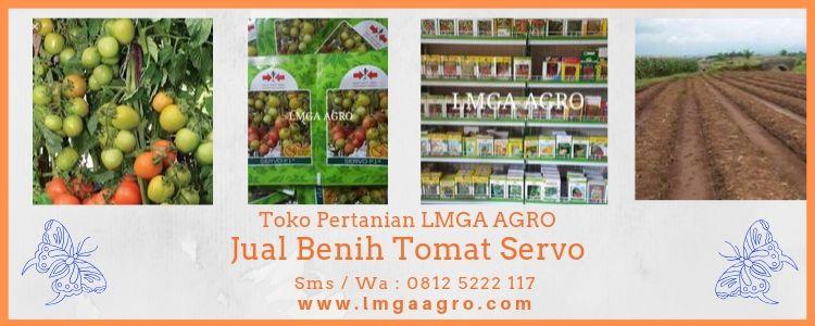 Jual Benih Tomat Servo, Juragan Tomat, Tomat Servo, Harga Diskon, Promo, LMGA AGRO