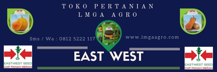Jual Benih Panah Merah Murah, East West, LMGA AGRO, Toko Pertanian, Harga murah