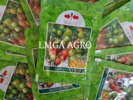 benih,bibit,tomat,tahan virus, servo,LMGA AGRO,tomat hibrida servo