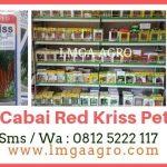 BUDIDAYA CABAI RED KRISS BISA PETIK 35 KALI