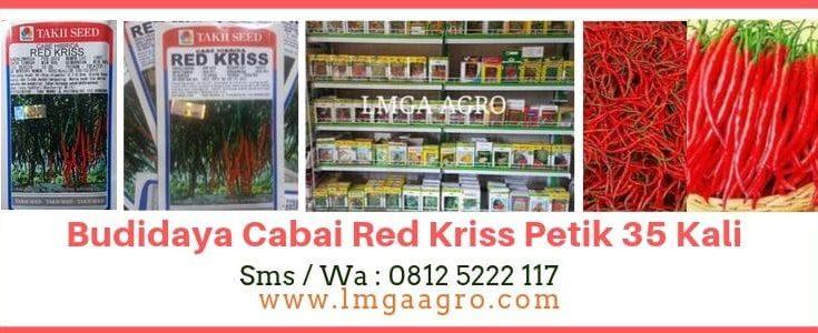 Budidaya Cabai Red Kriss, Jual Cabai Red Kriss, LMGA AGRO, Harga diskon, Toko pertanian