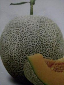 BUDIDAYA MELON ACTION ORANGE, manfaat buah melon, manfaat melon,  jual benih melon, toko pertanian, lmga agro