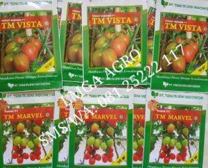 Jual Benih Tomat-Benih TM Vista