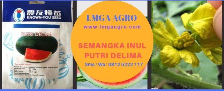 Semangka Inul Putri Delima, Semangka inul, Benih Semangka, LMGA AGRO, Harga diskon, Murah, Promo