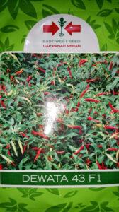 Jual benih sayur dewata 43 f1