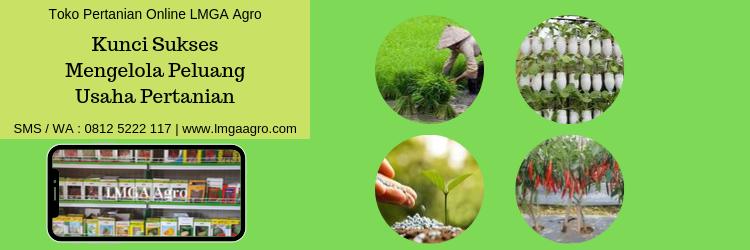 Kunci Sukses Mengelola Peluang Usaha Pertanian