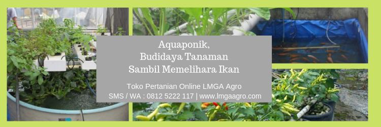 Aquaponik, Budidaya Tanaman Sambil Memelihara Ikan