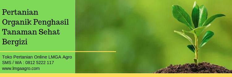 Pertanian Organik Penghasil Tanaman Sehat Bergizi