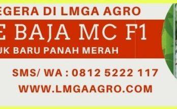 Cabe Baja MC F1, Cabe Baja MC, Baja MC F1, Cabe Baja MC Panah Merah, Cabe Baja MC F1 Murah, Jual cabe Baja MC F1, Cabe Baja MC East West, LMGA AGRO, Toko Pertanian