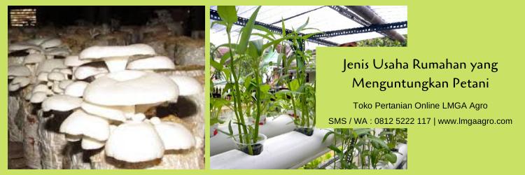 usaha rumahan,toko pertanian,budidaya tanaman,pertanian,budidaya,lmga agro