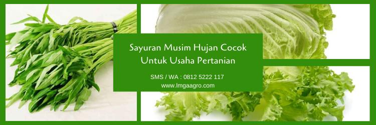 Sayuran, sayur, benih sayur, budidaya tanaman, benih tanaman, lmga agro