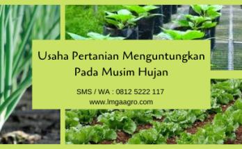 usaha pertanian, pertanian, budidaya tanaman, musim hujan, hujan, lmga agro