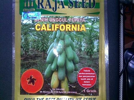 manfaat pepaya, jual benih pepaya, harga promo, toko pertanian, online shop, lmga agro