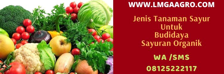 sayuran, organik, pertanian, tanaman