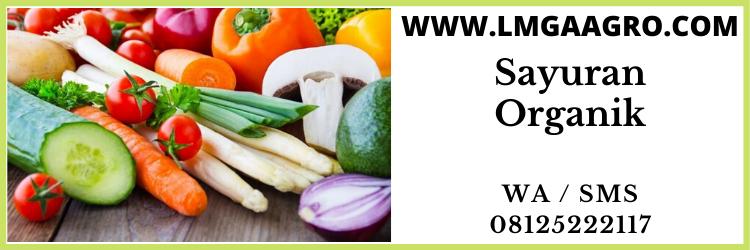jual, benih, sayuran, organik, harga, murah, lengkap