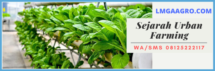 sejarah, urban, farming, pertanian, pertanian urban, urban farming